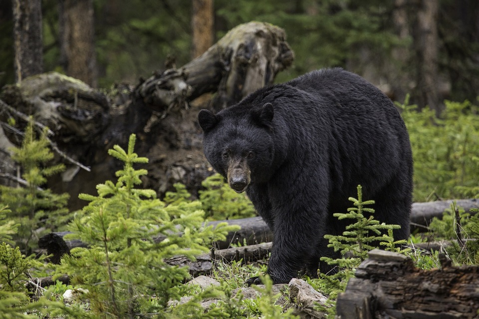 Wildlife and predator safety course